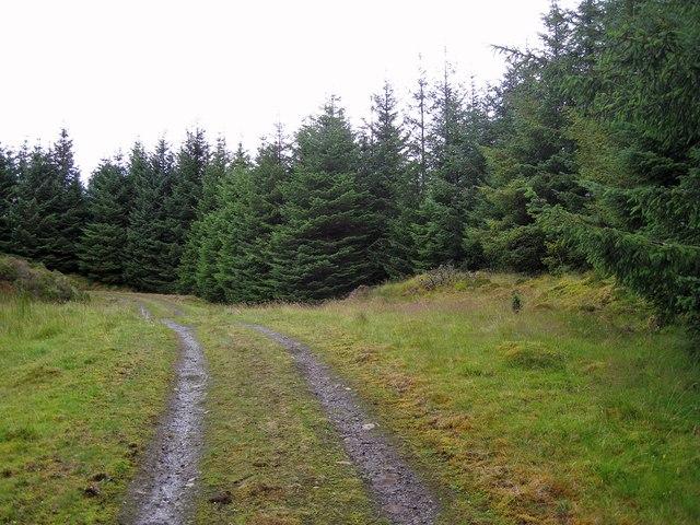 Tungadal Forest track