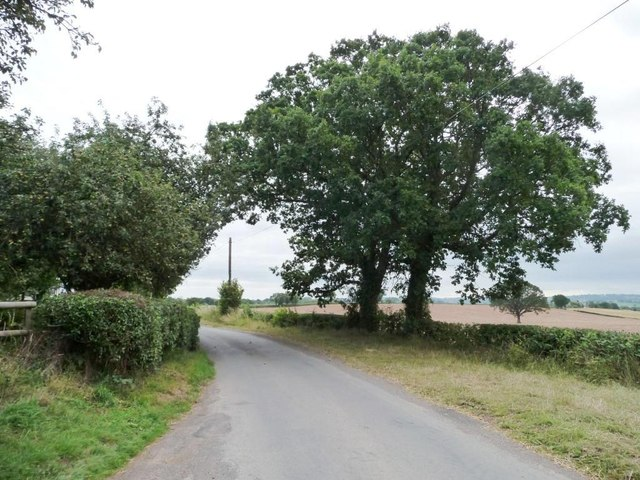 A pair of roadside trees
