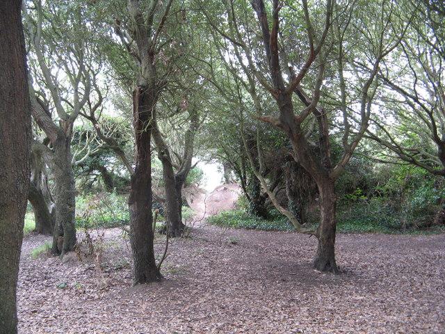 Small Wood at The Plantation