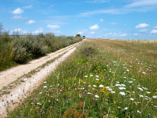 Wild Flowers by The Ridgeway