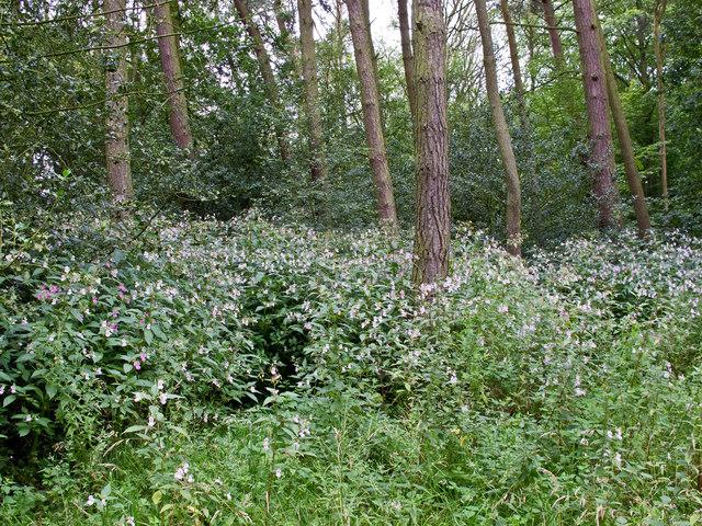Woodland near Stanley Pool