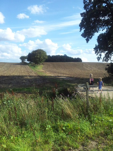 Footpath through farmland