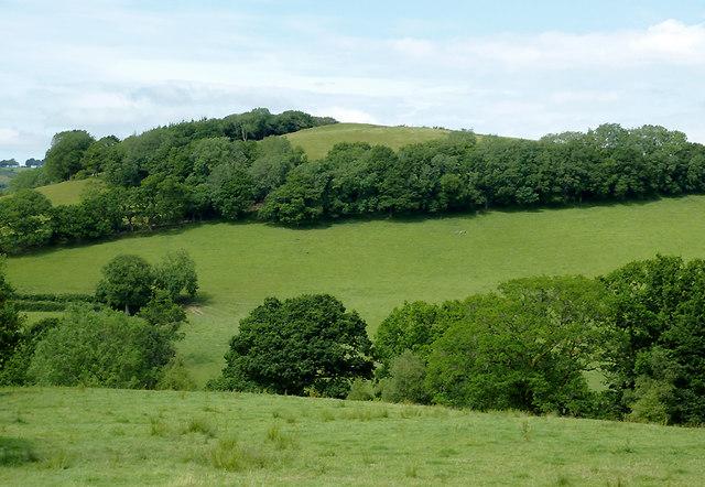 Pasture in Cwm Nant Meurig, Ceredigion