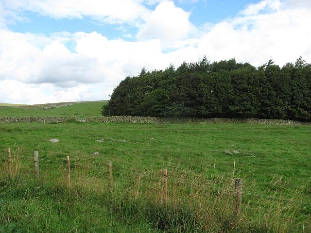 Woodland, Blythe