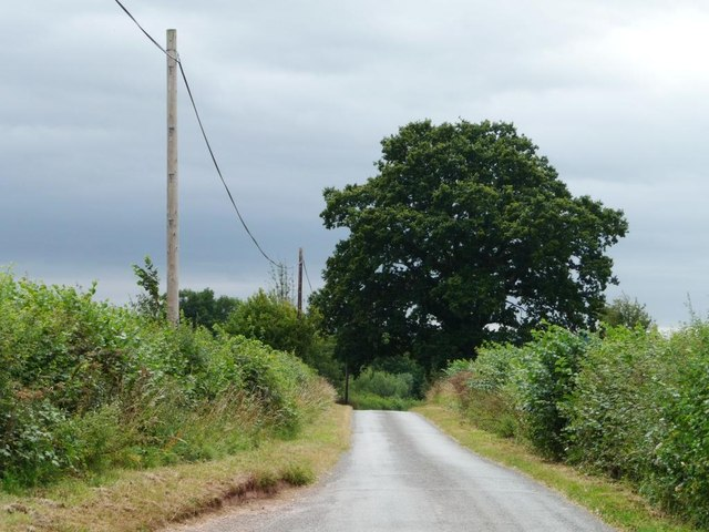 Large tree, small lane