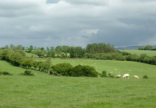 Pasture west of Cockshead, Ceredigion