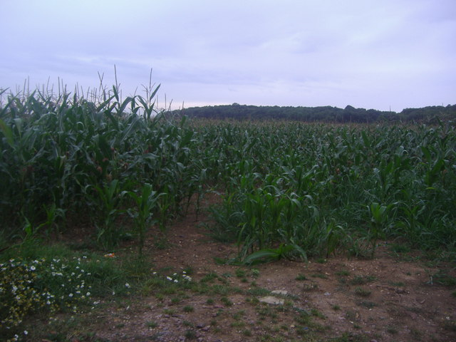 Field by Warren Lane, Clophill