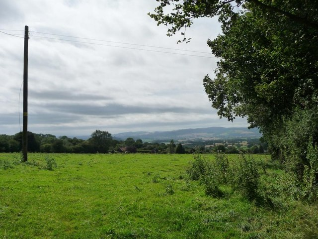 Telegraph pole in grassy field