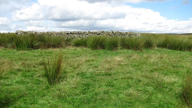 Sheep fank, Nun Rig