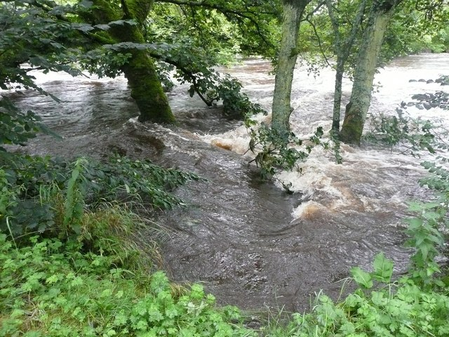 Trees in the river flow, Settle
