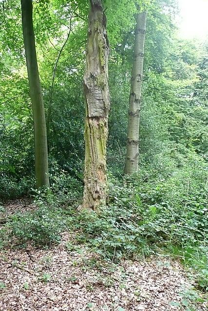 In Woodcock Wood