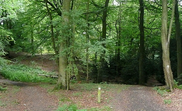 In Flagmore Wood