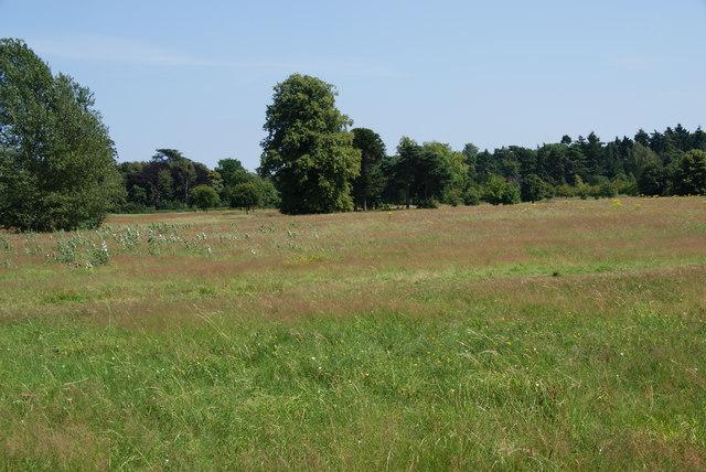 Grassland in Nonsuch Park