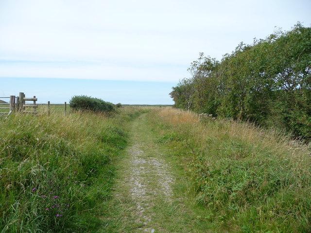 Footpath beside the Afon Ystwyth