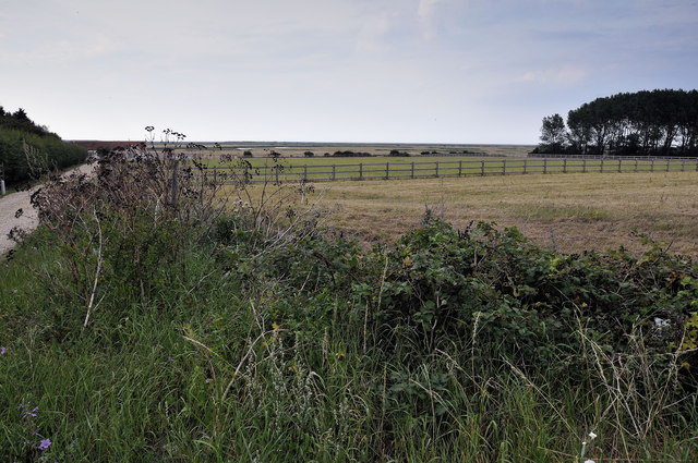 Twelve Acre Carr, Nr Burnham Deepdale