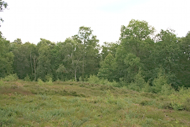 Heathland on Oxshott Heath