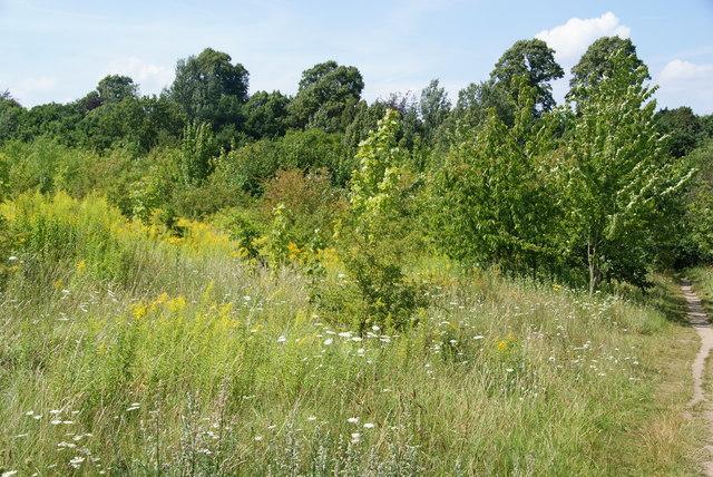 Vegetation near Nonsuch Park