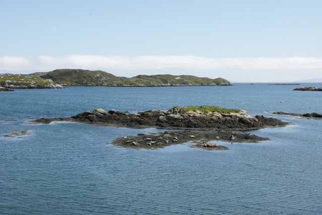 Seals on a holm at the head of Loch Fhionnsabhaigh