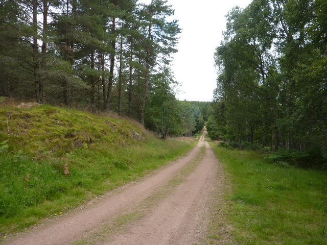 The Canadian Road, through an area of scots pine