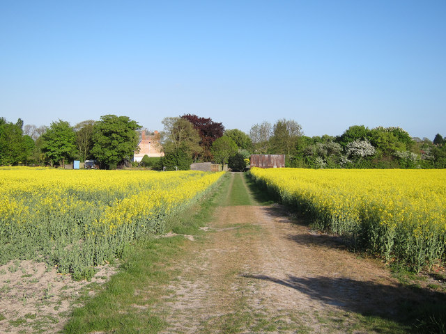 Footpath through the oil seed rape