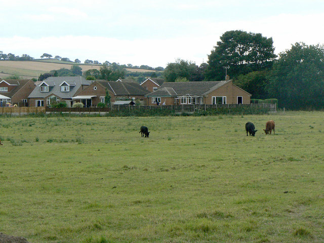 Pasture at Calverton