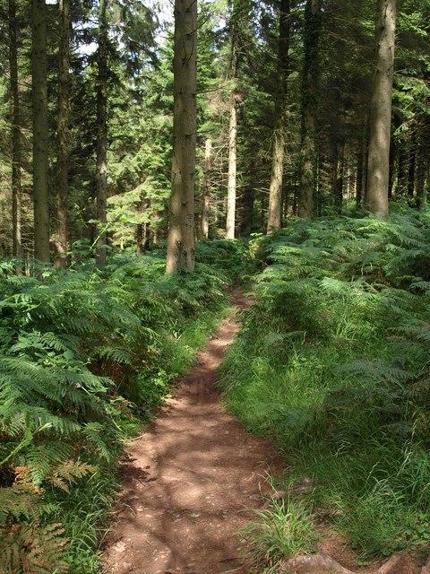 Path in Rowberrow Warren
