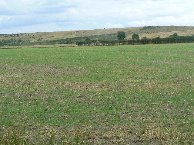 Landscape near Calverton