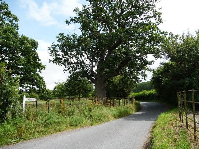 Bitterley Lane