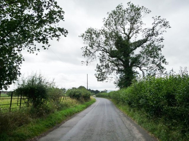 Roadside tree on the lane to Henley