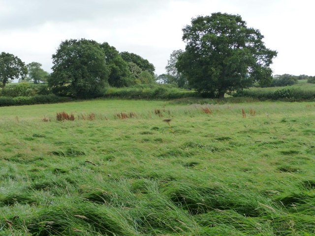 Trees in a field boundary, west of Bitterley