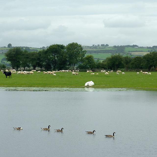 Pool by Maes-llyn farm near Cors Caron, Ceredigion