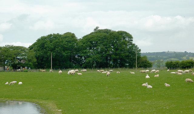 Lowland grazing by Cors Caron, Ceredigion