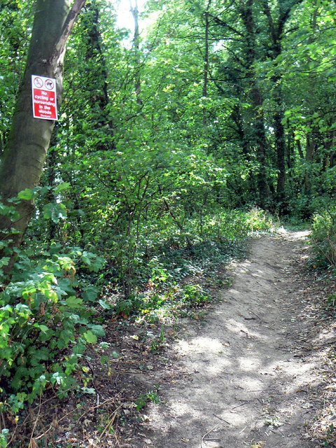 Path in Fox Wood