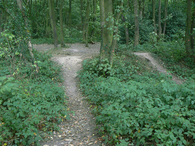 Earthwork in Fox Wood