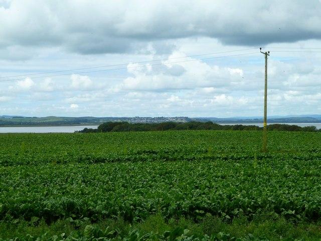 Innerwell Plantation