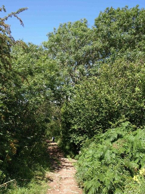 Bridleway to Burrington Combe