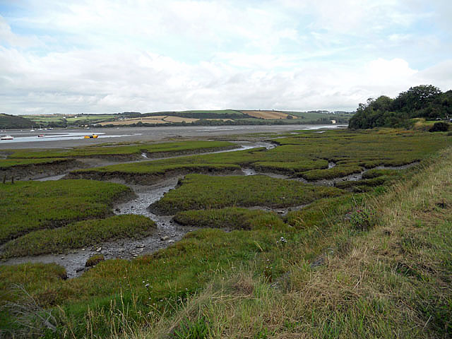 Salt marsh on the estuary