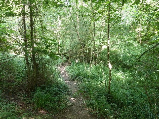 Footbridge over Ludwell Ghyll in Whitestone Wood