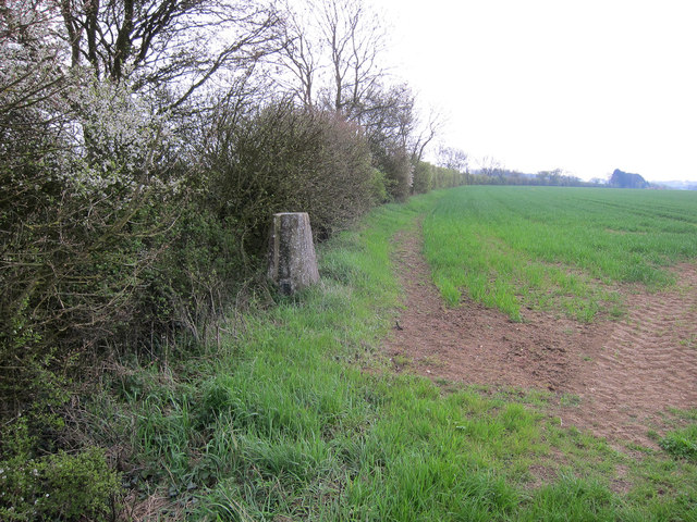 Trig point in a hedge