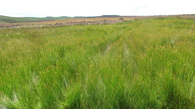 Wetland, Moss Syke