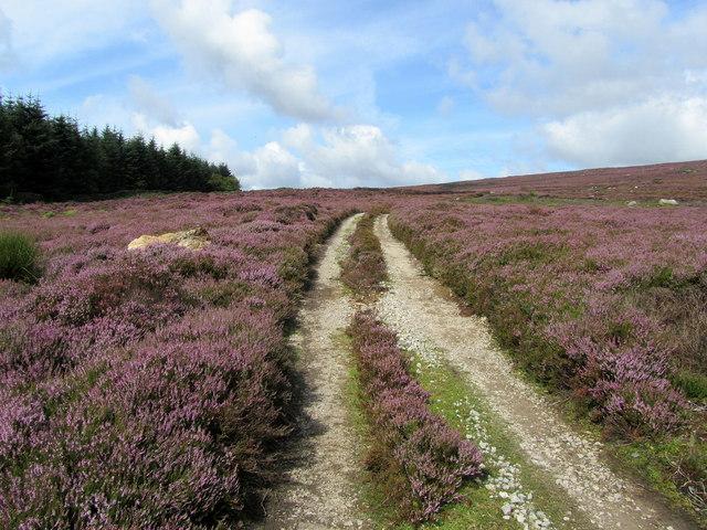 Track above Laund Pasture Plantation