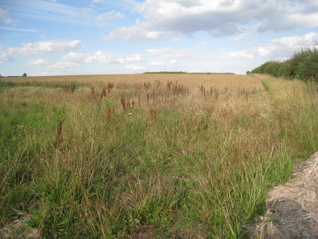 Looking across a wheatfield towards the reservoir