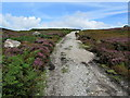 SE0858 : Track above Great Agill Beck by Chris Heaton