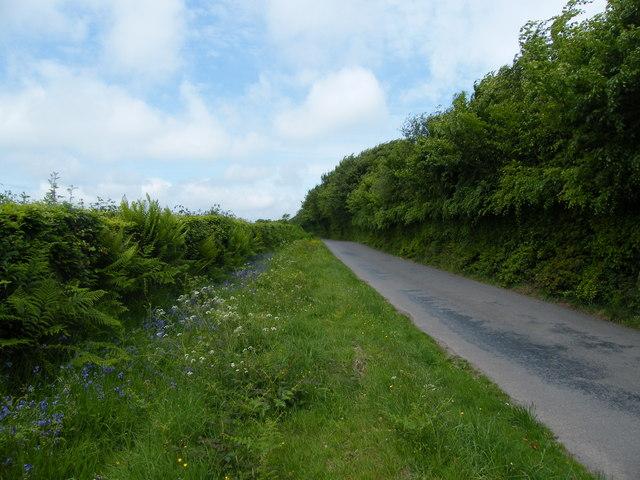Dulverton : Country Lane