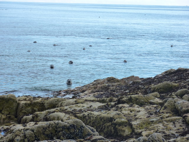 Rock, sea and seals  at Scotstown Head