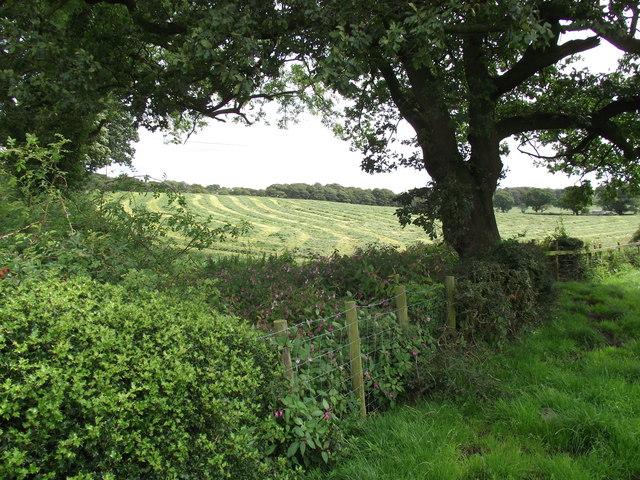 Mown hay field