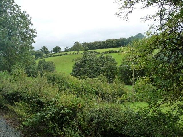 Green hillside above a stream