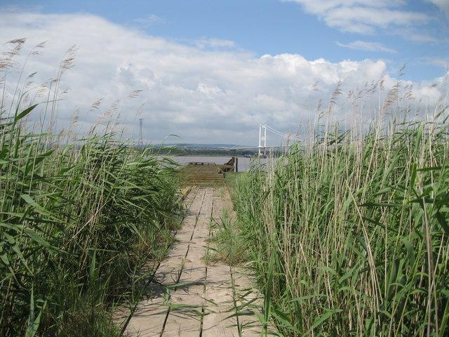 Overgrown slipway to Aust Ferry
