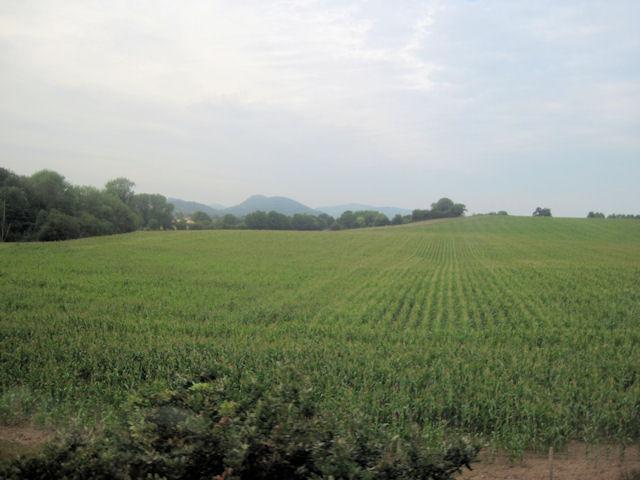 Crops near Millhouse farm from railway
