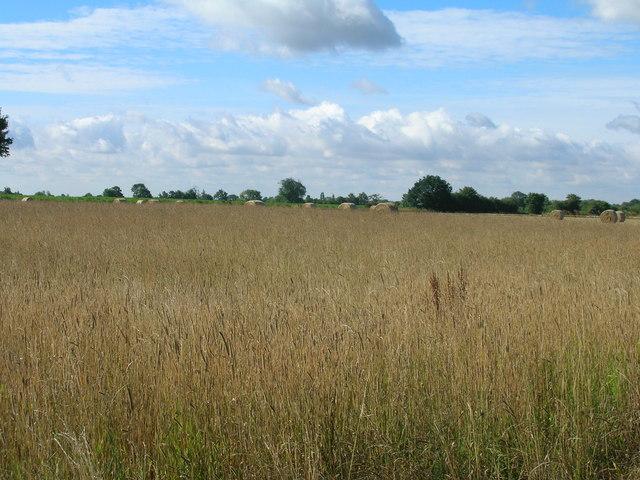 Farmland near Riccall